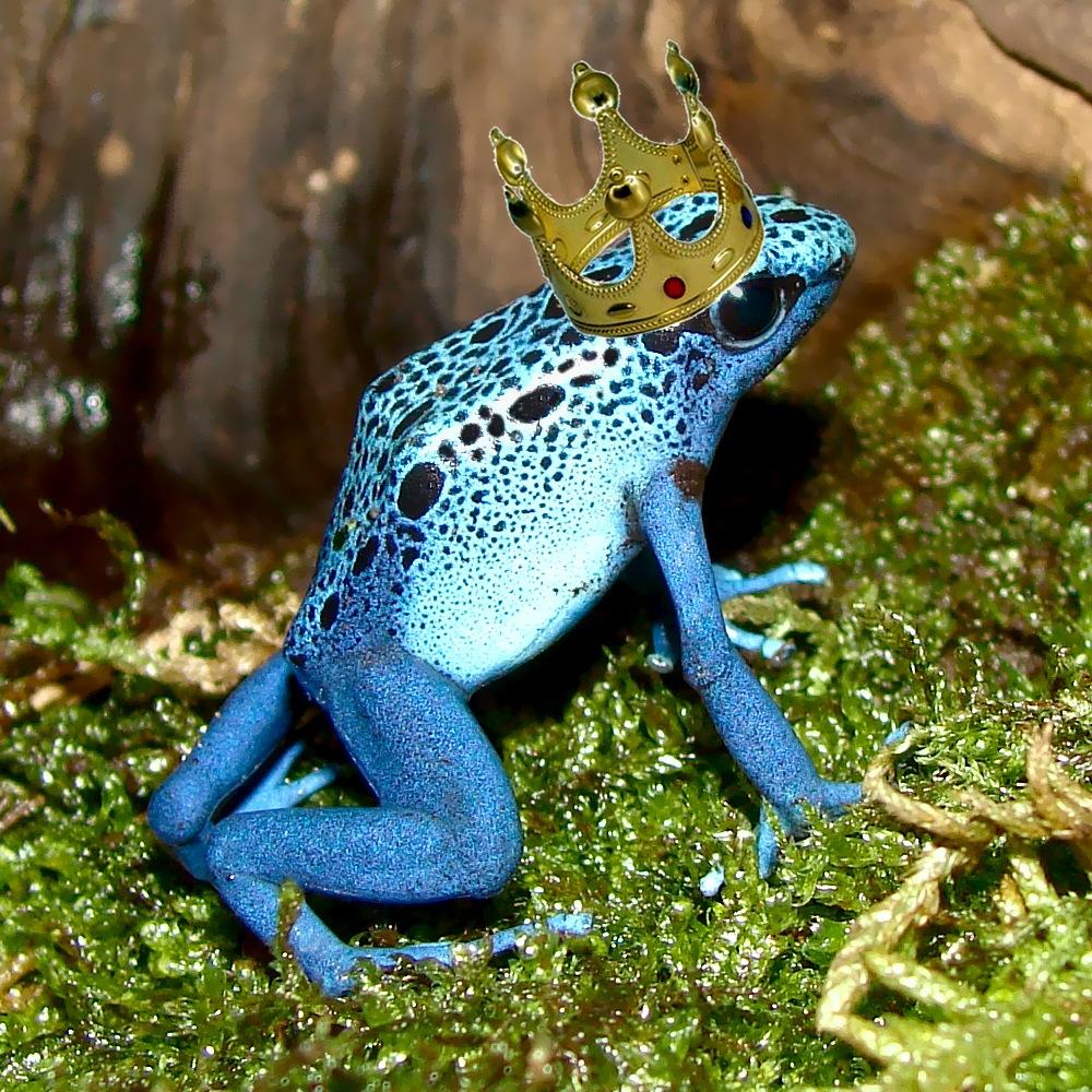 Resultado de imagen de principe azul rana